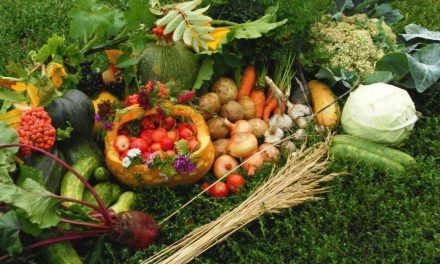 Так ли важно питаться «чистыми продуктами» или эта проблема надумана?